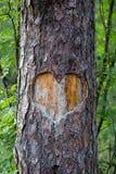 在树雕刻的心脏 免版税图库摄影