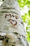 在树雕刻的情书 免版税库存图片