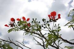 在树顶部的花 库存照片