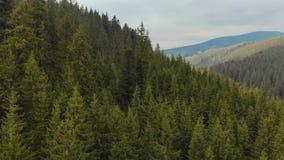 在树,具球果绿色冷杉上面的飞行,反对高地的一个美丽如画的风景的背景 股票录像