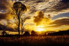 在树,山农村澳大利亚后的惊人的日落太阳设置 免版税库存照片