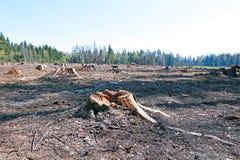 在树以后砍伐的森林沼地  免版税图库摄影
