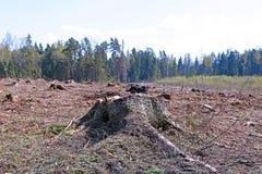 在树以后砍伐的森林沼地  免版税库存照片