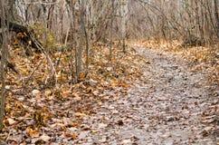 在树2的秋天道路 免版税库存照片