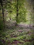 在树fary传说下的紫罗兰色花 免版税图库摄影