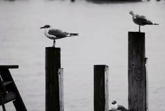 在栖息处的鸟 库存照片