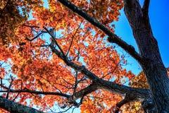 在核桃小山公园,新不列颠,CT的秋叶 免版税库存照片