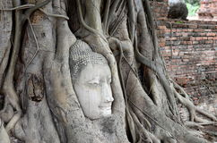 在根大树,旁边射击的老菩萨头 免版税图库摄影