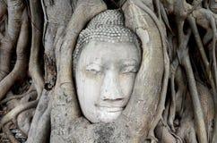在根大树,泰国的老菩萨头 免版税库存照片