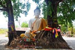 在根树的菩萨雕象在巴色在占巴塞省,老挝 免版税库存照片