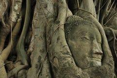 在根树里面的菩萨的头在阿尤特拉利夫雷斯2 免版税图库摄影