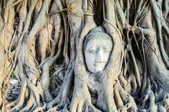 在根的面孔 图库摄影