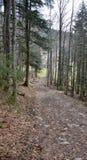 在格伦兴附近的一点森林 免版税库存图片