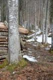 在格伦兴附近的一点森林 库存照片