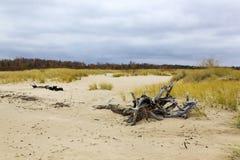 在格但斯克,波兰附近的狂放的海滩 图库摄影
