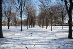 在格兰特公园,芝加哥IL的Sowy天 免版税图库摄影