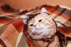 在格子花呢披肩下的猫 库存图片