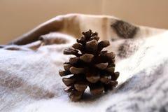 在格子花呢披肩的棕色松树锥体 库存图片