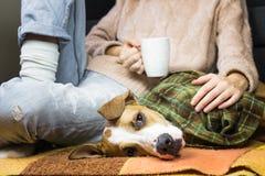 在格子花呢披肩盖的小狗放松用人 免版税库存照片