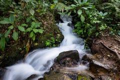 在格德火山Pangrango山中间木头的可爱的模糊的光滑的小河  库存图片