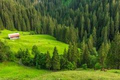 在格斯塔德,瑞士附近的山风景 图库摄影