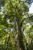 在格查尔足迹的巴拿马djungle 免版税图库摄影