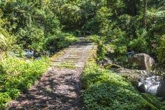 在格查尔足迹的巴拿马djungle 免版税库存图片