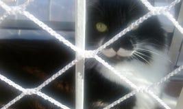 在格栅后的猫 免版税库存照片