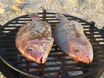 在格栅的两条鱼 免版税库存图片