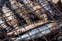 在格栅的沙丁鱼 库存图片