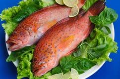 在格栅的石斑鱼鱼 免版税库存照片