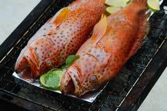 在格栅的石斑鱼鱼 免版税图库摄影