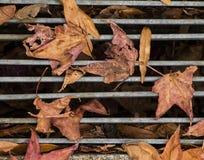 在格栅的秋天叶子 免版税库存图片