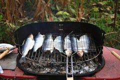 在格栅的鱼 库存图片