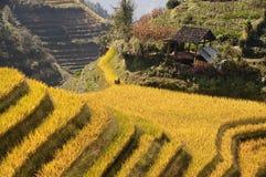在桂林,广西附近的露台的米领域 库存图片