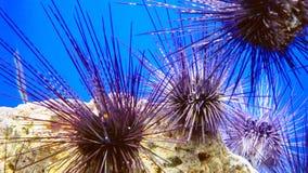 在桂海的底部的海顽童 免版税图库摄影