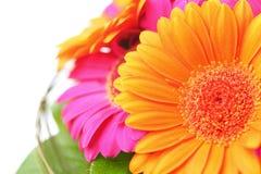 在桃红色和桔子的花花束 免版税库存图片