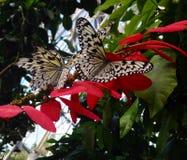 在桃红色和橙色花的黑白蝴蝶 免版税库存图片