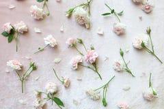 在桃红色天鹅绒背景的桃红色玫瑰 免版税库存图片