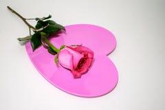 在桃红色心脏顶部的长的词根桃红色玫瑰 免版税库存照片