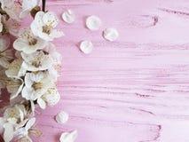 在桃红色木背景的樱花分支新葡萄酒春天 免版税图库摄影
