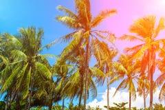 在桃红色火光的椰子树树 与掌上型计算机的热带横向 免版税库存照片