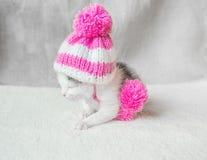 在桃红色的一只逗人喜爱的小的小猫编织了有大型机关炮睡眠的帽子在一张白色地毯 在帽子的逗人喜爱的睡觉全部赌注 免版税库存图片