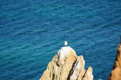 在桃红色的一只鸟晃动-葡萄牙,阿尔加威的南部 免版税图库摄影