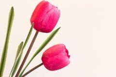 在桃红色的塑料郁金香与大copyspace 这朵被克隆的花象征基因操作做两个相同形式锂 免版税库存图片