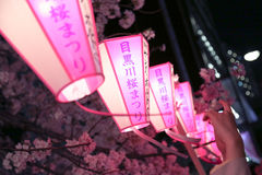 在桃红色的日本灯:樱花节日 免版税库存照片