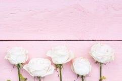 在桃红色的白玫瑰 免版税库存照片