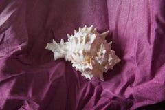 在桃红色纺织品的奇怪海壳 免版税库存照片