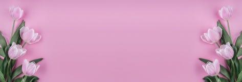 在桃红色背景的桃红色郁金香花 等待的春天 看板卡愉快的复活节 免版税库存照片
