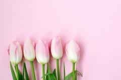 在桃红色背景的桃红色郁金香 平的位置,顶视图 背景能明信片使用的华伦泰 免版税图库摄影